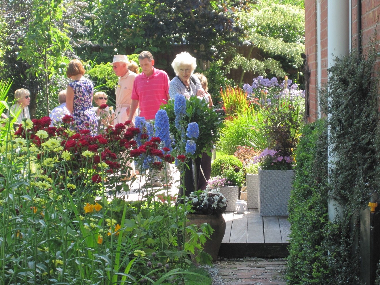 Angie barker 39 s open garden local life 247 for Local landscape gardeners